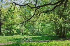Ποδήλατο το καλοκαίρι πάρκων Στοκ Εικόνες