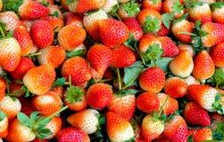 πολλή φράουλα Στοκ Φωτογραφία