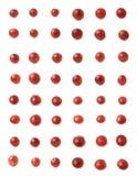 Πολλαπλάσια σκούρο κόκκινο σταφύλια που απομονώνονται Στοκ Φωτογραφία