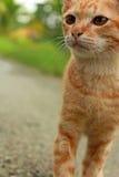 Πολεμική γάτα Στοκ φωτογραφίες με δικαίωμα ελεύθερης χρήσης