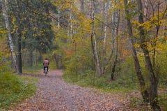 Ποδηλάτης στο δάσος φθινοπώρου Στοκ φωτογραφία με δικαίωμα ελεύθερης χρήσης