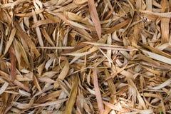 Πολλοί ξεραίνουν τα φύλλα μπαμπού ως υπόβαθρο Στοκ φωτογραφίες με δικαίωμα ελεύθερης χρήσης