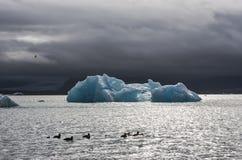 Πολλοί φραγμοί πάγου και πάπιες στη λίμνη Jokulsarlon, Ισλανδία Στοκ εικόνες με δικαίωμα ελεύθερης χρήσης
