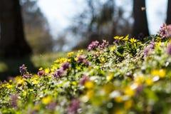 Πολυάσχολος λίγη μέλισσα Στοκ Φωτογραφία
