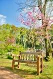 Πολυθρόνα στον κήπο στο ANG Khang, Chiang Mai Doi Στοκ Εικόνα
