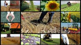 Πολυ οθόνη γεωργίας απόθεμα βίντεο