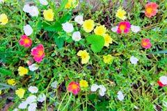 Πολυ λουλούδια χρώματος σε ένα λιβάδι σε μια ηλιόλουστη ημέρα Στοκ φωτογραφία με δικαίωμα ελεύθερης χρήσης