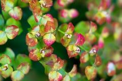 Πολυ χρωματισμένα φύλλα ενός μικρού θάμνου Μακροεντολή Στοκ Εικόνα