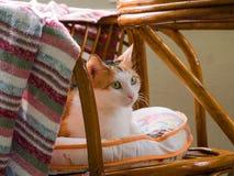 Πολυ χρωματισμένη γάτα Στοκ εικόνες με δικαίωμα ελεύθερης χρήσης