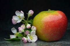 Πολωνικό μήλο Στοκ φωτογραφία με δικαίωμα ελεύθερης χρήσης