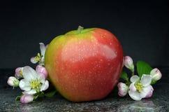 Πολωνικό μήλο Στοκ φωτογραφίες με δικαίωμα ελεύθερης χρήσης