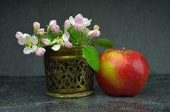 Πολωνικό μήλο Στοκ εικόνα με δικαίωμα ελεύθερης χρήσης