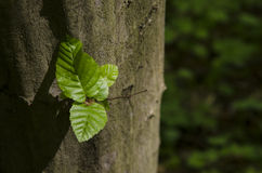 Πολωνός του δέντρου μια φωτεινή ηλιόλουστη ημέρα Στοκ Εικόνες