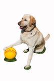 Ποδόσφαιρο για τα σκυλιά στοκ εικόνες