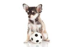 Ποδόσφαιρο σκυλιών που απομονώνεται στο άσπρο υπόβαθρο Στοκ Εικόνες