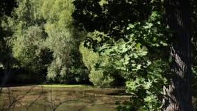 Πολύβλαστες πρασινάδα και σκιές απόθεμα βίντεο