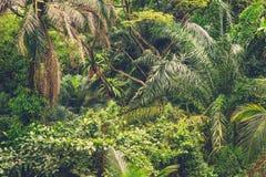 Πολύβλαστη τροπική πράσινη ζούγκλα Στοκ εικόνες με δικαίωμα ελεύθερης χρήσης