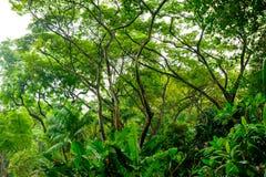 Πολύβλαστη τροπική πράσινη ζούγκλα Στοκ Εικόνες