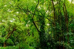 Πολύβλαστη τροπική πράσινη ζούγκλα Στοκ εικόνα με δικαίωμα ελεύθερης χρήσης