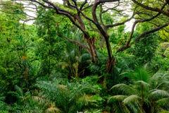 Πολύβλαστη τροπική πράσινη ζούγκλα Στοκ Φωτογραφίες