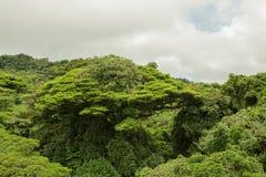 Πολύβλαστος θόλος Monteverde Κόστα Ρίκα τροπικών δασών στοκ εικόνες