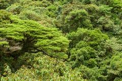 Πολύβλαστος θόλος Monteverde Κόστα Ρίκα τροπικών δασών στοκ εικόνες με δικαίωμα ελεύθερης χρήσης