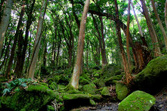 Πολύβλαστο δάσος ζουγκλών κοντά στη μυστική πτώση Kauai Στοκ Φωτογραφία