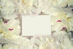 Πολύβλαστο πλαίσιο των άσπρων peony λουλουδιών με τη σημείωση για τα συγχαρητήρια Κάρτα λουλουδιών Στοκ Εικόνα