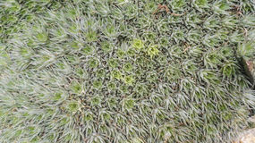 Πολύς μικρός τενεκεδένιος κάκτος στον κήπο Στοκ Φωτογραφίες