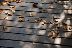 Πολύς ξηρός στο ξύλινο πάτωμα Στοκ φωτογραφία με δικαίωμα ελεύθερης χρήσης