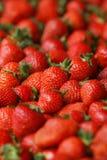 Πολύς στενός επάνω φραουλών Στοκ Εικόνες