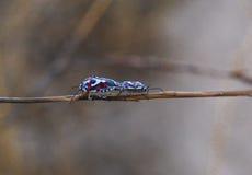 Πολύχρωμα έντομα Στοκ Εικόνα