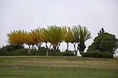 πολύχρωμα δέντρα Στοκ εικόνες με δικαίωμα ελεύθερης χρήσης