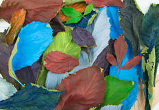 Πολύχρωμα ξηρά φύλλα Στοκ Φωτογραφίες