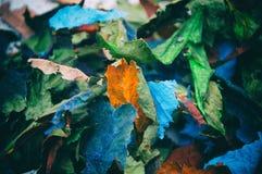 Πολύχρωμα ξηρά φύλλα Στοκ Φωτογραφία