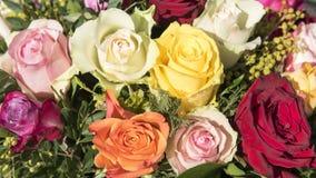 πολύχρωμα τριαντάφυλλα Στοκ Φωτογραφία