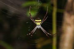 Πολύχρωμη αράχνη Argiope Στοκ Φωτογραφίες