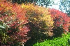 Πολύχρωμο δέντρο στο πάρκο. Στοκ Εικόνες