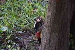 Πολύχρωμο πουλί Στοκ Εικόνες