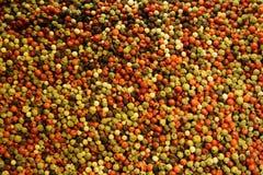 Πολύχρωμο peppercorn Στοκ Εικόνες