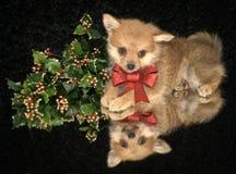 Κουτάβι Χριστουγέννων Στοκ Εικόνα