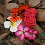 Πολύ είδος λουλουδιών στοκ φωτογραφία με δικαίωμα ελεύθερης χρήσης