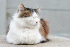 Πολύ ηρεμία ευτυχής με σε εσωτερική γάτα Στοκ εικόνες με δικαίωμα ελεύθερης χρήσης