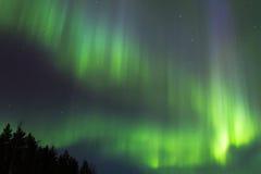 Πράσινες ακτίνες Στοκ Εικόνα