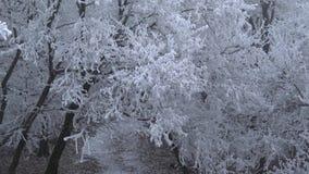 Πολύ κρύα ημέρα στο δάσος στην Ουγγαρία απόθεμα βίντεο