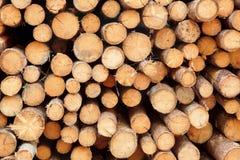 Πολύ μεγάλο ξύλο πεύκων συνδέεται τη μεγάλη σύσταση υποβάθρου Woodpile Στοκ εικόνες με δικαίωμα ελεύθερης χρήσης