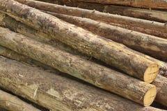 Πολύ μεγάλο ξύλο πεύκων συνδέεται τη μεγάλη σύσταση υποβάθρου Woodpile Στοκ Φωτογραφία