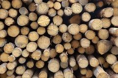 Πολύ μεγάλο ξύλο πεύκων συνδέεται τη μεγάλη σύσταση υποβάθρου Woodpile Στοκ φωτογραφία με δικαίωμα ελεύθερης χρήσης