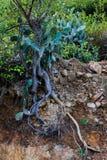 Πολύ παλαιό δέντρο από την Ταϊλάνδη στοκ φωτογραφία