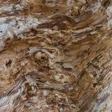 Πολύ παλαιό ξύλο Στοκ Εικόνες